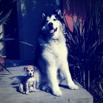 San Diego Pets Friendly Real Estate Agents